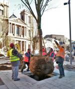 Belfort Plantation arbre 26-11-2013