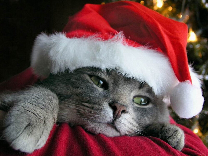 chat-pere-noel