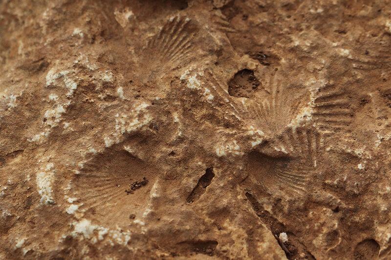 Fossiles sur le sentier