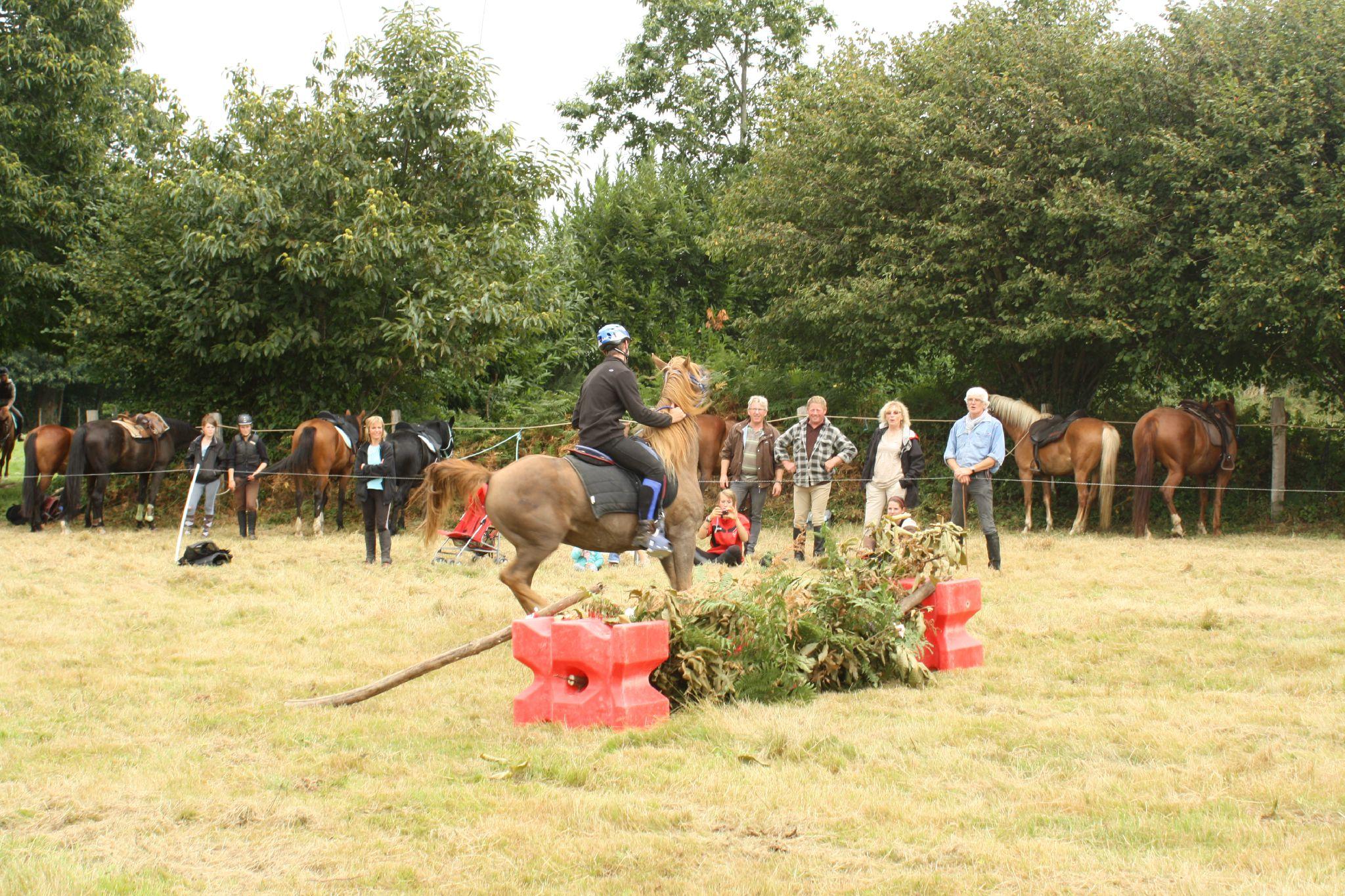 équitation de pleine nature - rallye équestre (156)