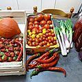 tomates, piments doux des landes, potimarron, cives ou ciboules www.passionpotager.canalblog.com