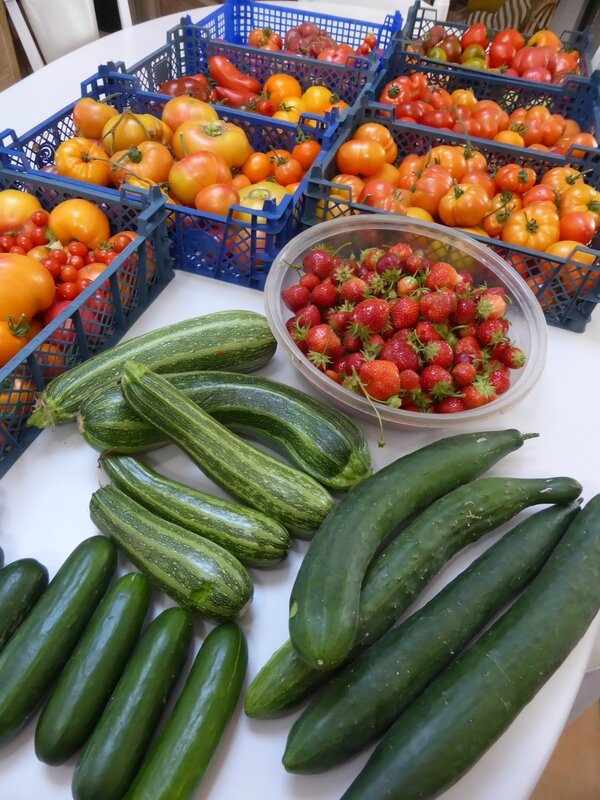 11-tomates, courgettes, concombres (3)