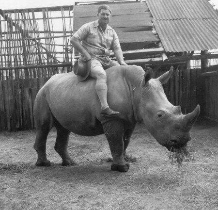 Rhino_Riding