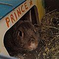 Prince (1)