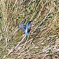 Arcachon : les oiseaux du bassin.