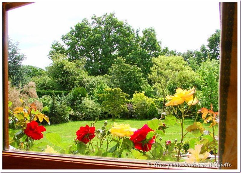 Mon jardin vu de ma fenêtre (8)