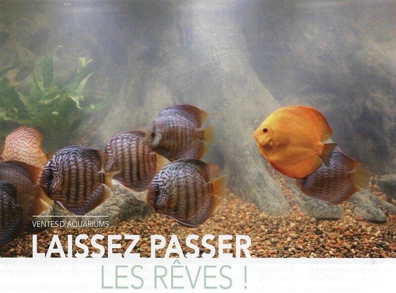 Ventes aquariums