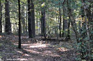 Forêt de Sologne