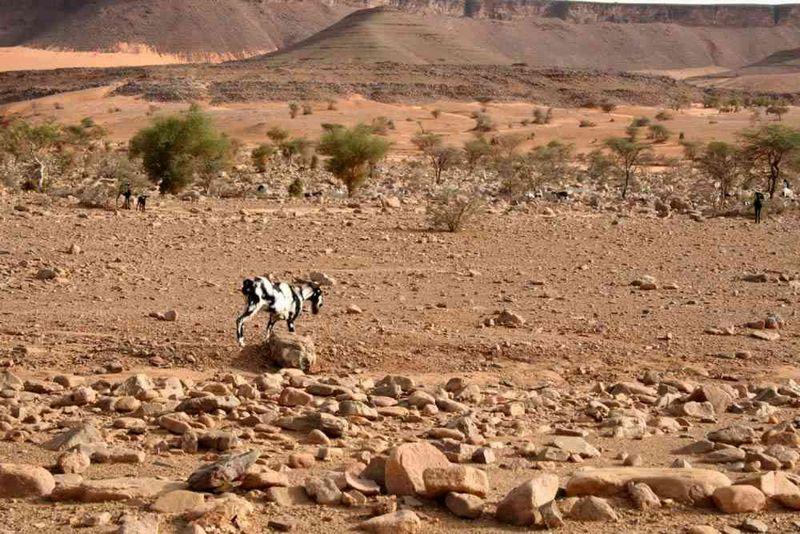 Seckasysteme-Mauritaniemauritania%202007%20049_jpg_rs