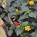 hunawihr papillon cigogne (76)