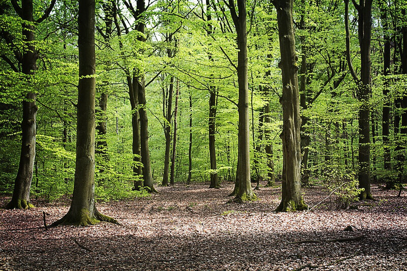 forest-3416908_960_720