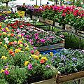 [drôme] découvrir blacons à l'occasion de son marché aux fleurs