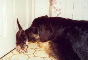 jo et le chat