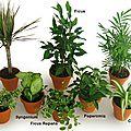 Purifiez votre air avec les plantes