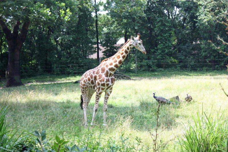 J11 - 08 juillet 2014 - zoo du Bronx (31).JPG