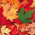 Balfolks d'automne 2012
