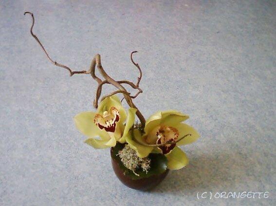 Orchidées zen