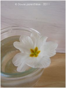 Magnolia_6
