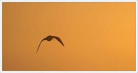 Aiguillon pointe lulu courlis vol aurore 181211