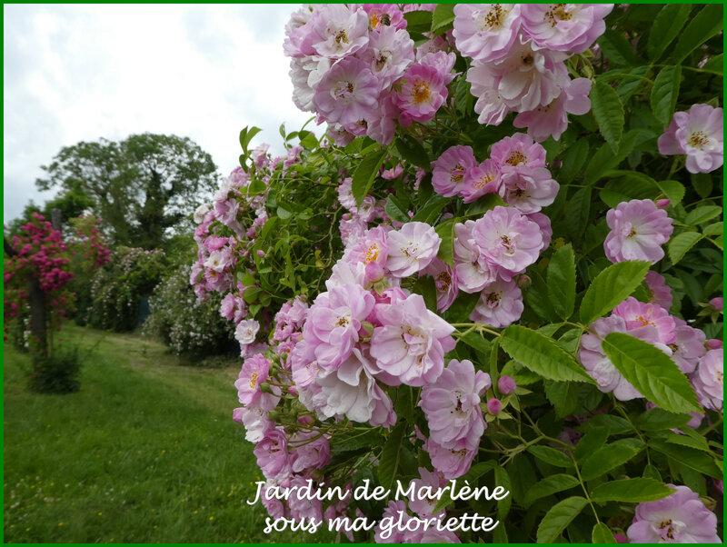 rosiers16