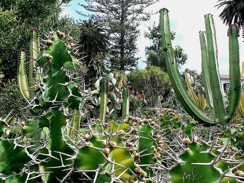 cactus (cherchez l'erreur)