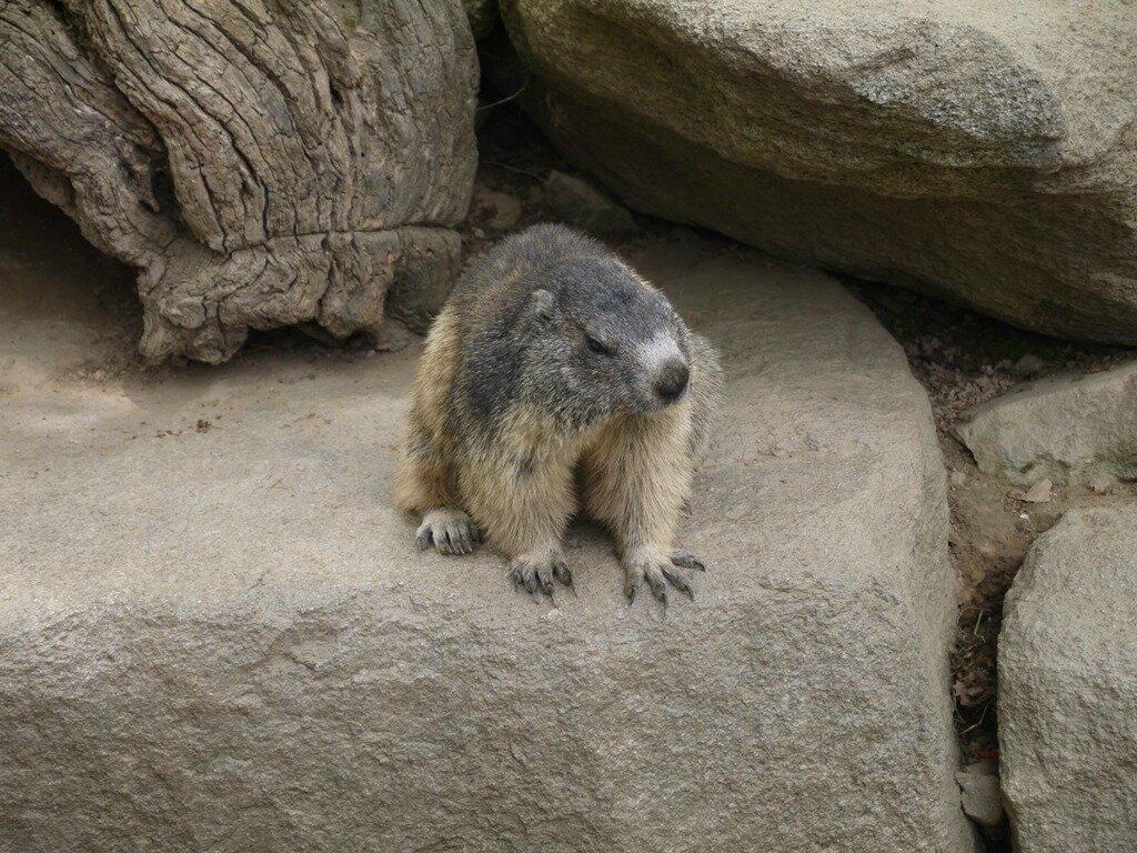 05 Les Marmottes (18)