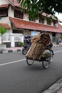 Sulawesi_040