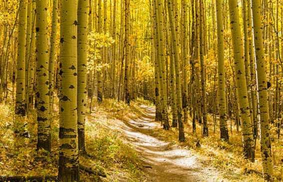 alamyphoto-forêt2