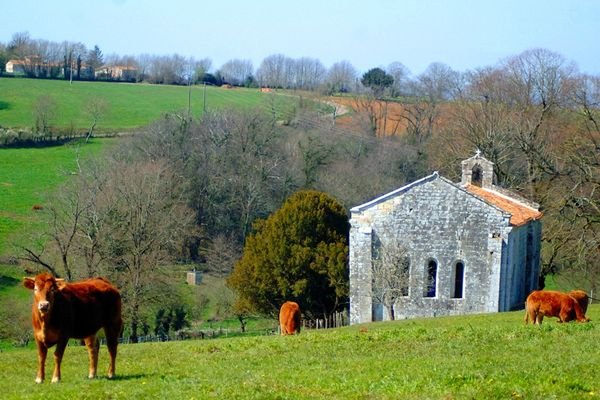 Chapelle Malleyrand et vaches 2011