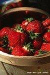 fraises7
