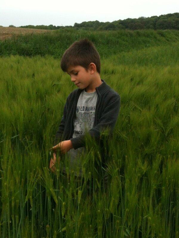 Doudou dans les champs de blé