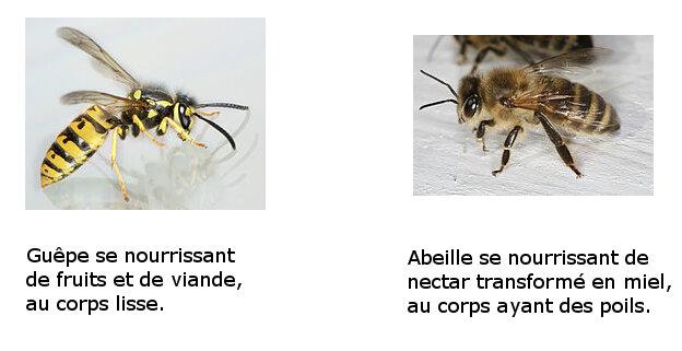 Abeille et Guête