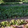Petite récolte de mon jardin.