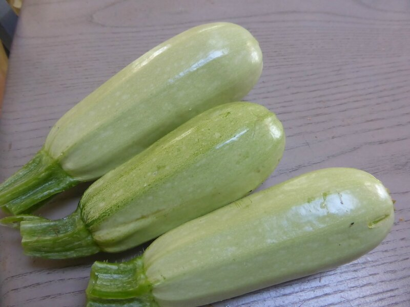 23-courgettes (1)