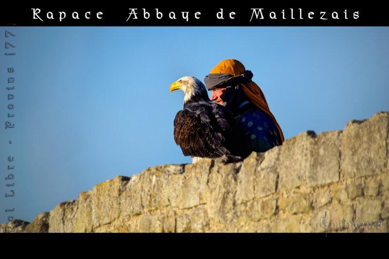 Rapace Abbaye de Maillezais