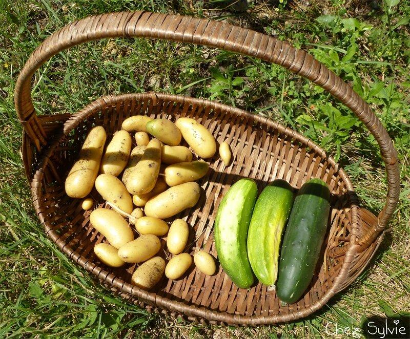 2018-07-07 Pommes de terre-concombres