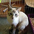 Nouchki - parti à Sauv et chats en détresse - adopté