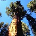Sequoia & Kings