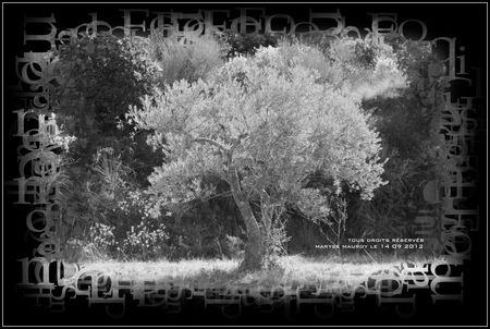 olivier nb2