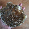 Tartare d'huîtres aux perles du japon dans son écrin