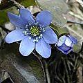 Petit printemps bleu et blanc