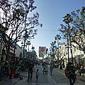 Santa Monica & Venice Beach (524)