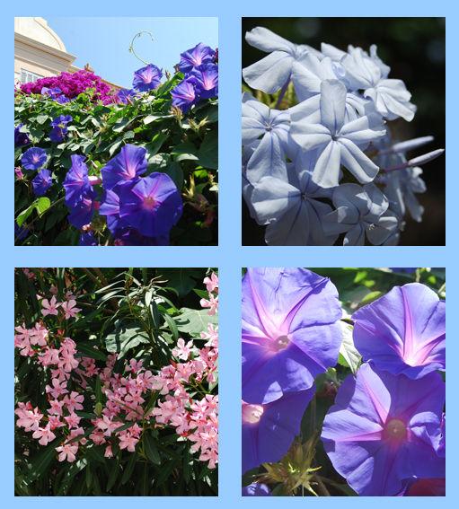 fleurs_montage_blog