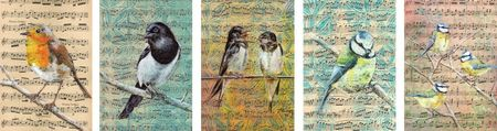 cartes_oiseaux