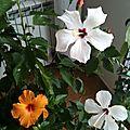 Mes fleurs du soleil