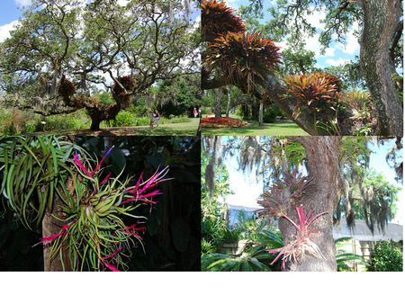 mary_selby_epiphytes