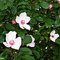 Fleurs de Léon 020518