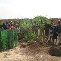 Cop 21 à paris et plantation de moringa oleifera ou arzan tiiga (en moore) à ouagadougou !!!