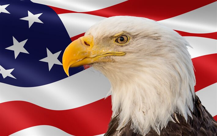 thumb2-bald-eagle-bird-bird-of-prey-american-flag-usa