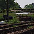 2014 - Dimanche 3 juin 2018 - Guyvelde - un dimance à la ferme